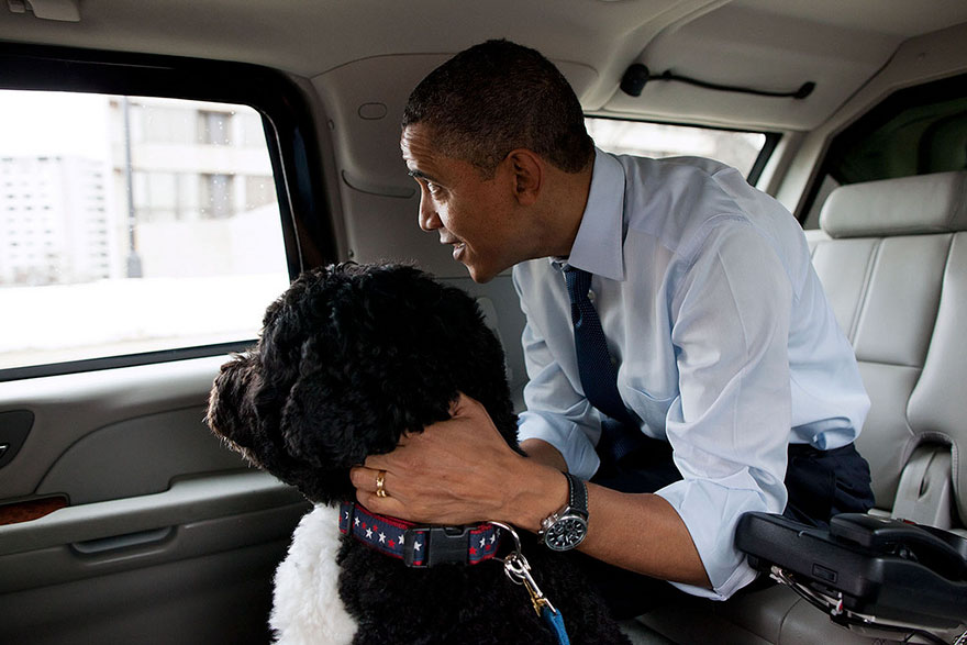 The President And Bo, The Obama Family Dog, Ride In The Presidential Motorcade En Route To PetSmart In Alexandria