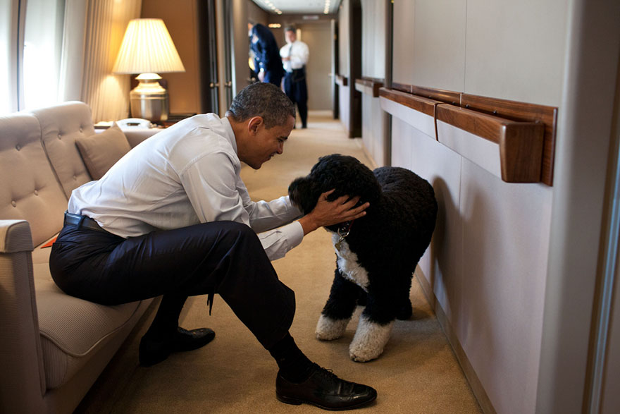 President Barack Obama Plays With Bo, The Obama Family Dog, Aboard Air Force One During A Flight To Hawaii
