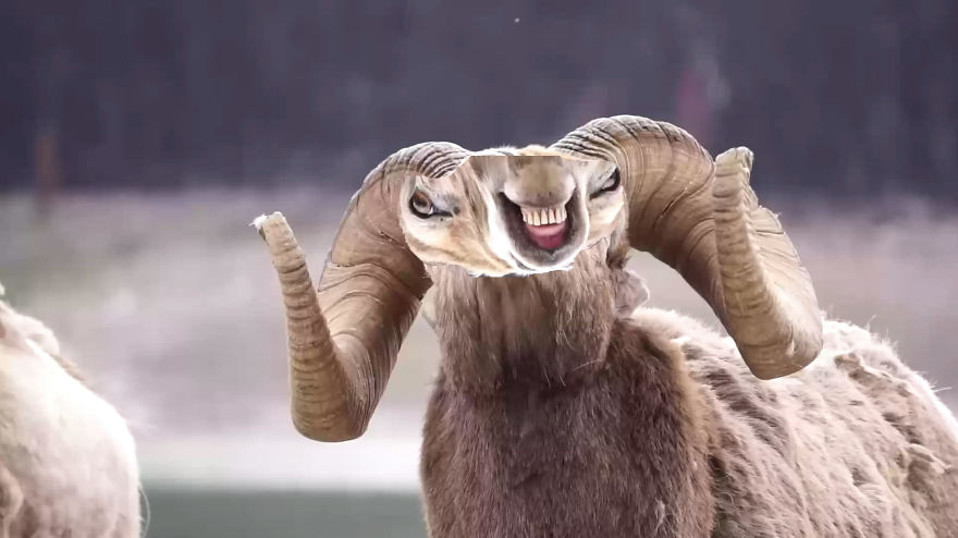The Real Bighorn