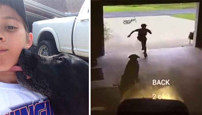 Boys Sneaks Into Neighbors' Garage Every Day To Hug Their Dog
