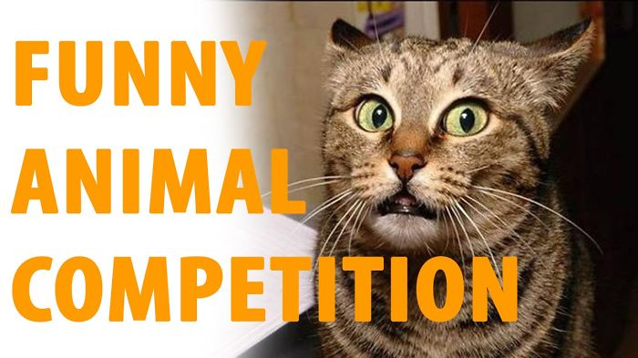 Funny Animal Competition In June 4, 2016