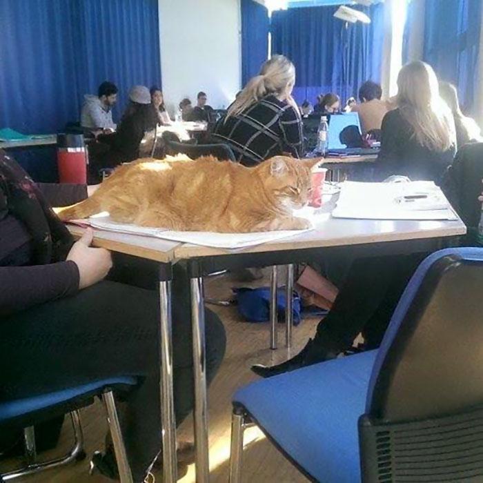 campus-cat-university-cuddles-augsburg-germany-14