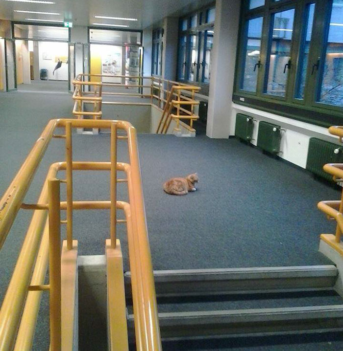 campus-cat-university-cuddles-augsburg-germany-18