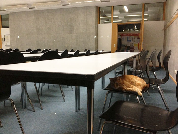 campus-cat-university-cuddles-augsburg-germany-26