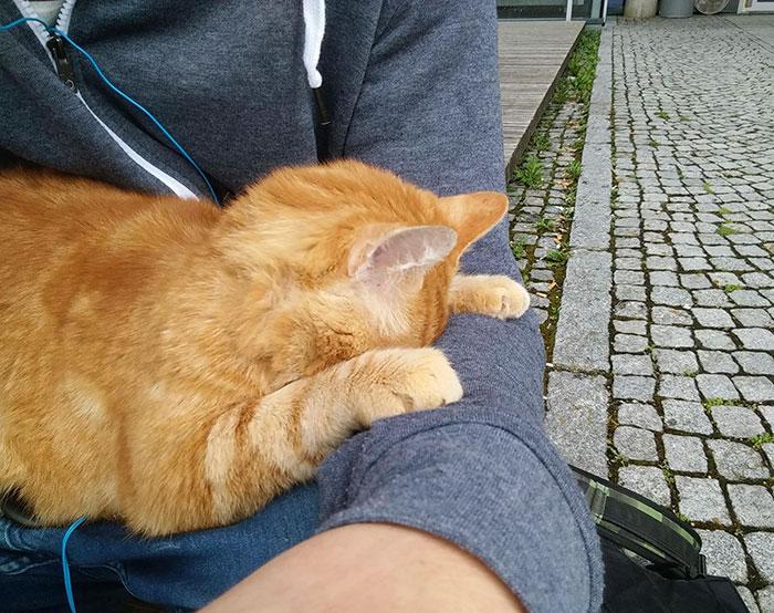 campus-cat-university-cuddles-augsburg-germany-4