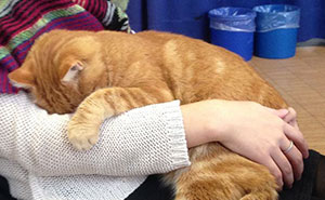 This Cat Comes To University Every Day To Help Students With Cuddles