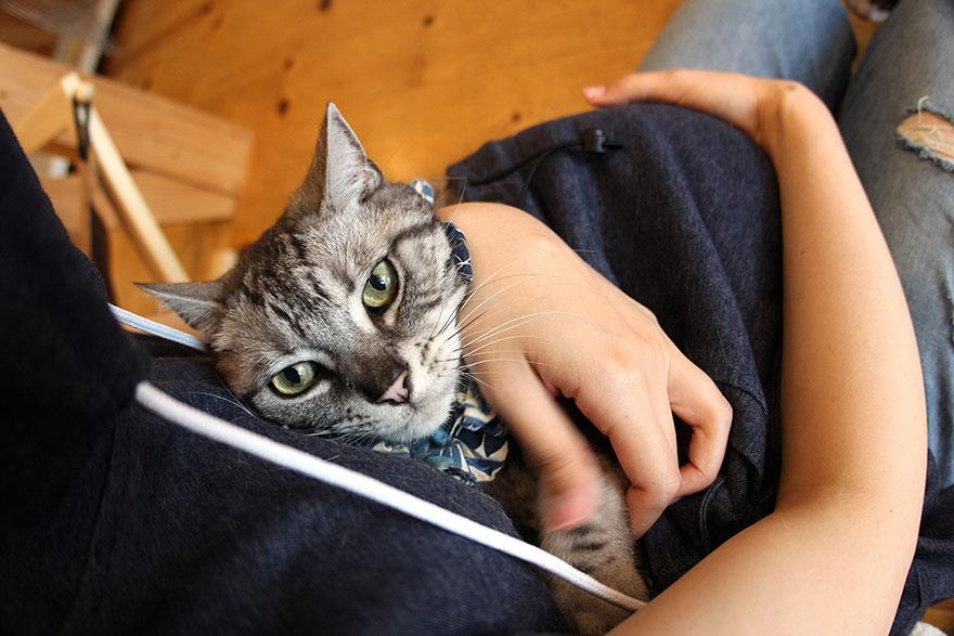 cat-hoodie-pouch-summer-mewgaroo-hoodie-unihabitat-3