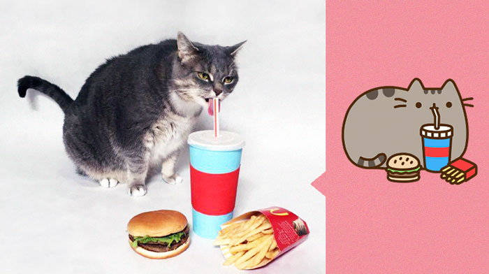 I Recreated Pusheen Stickers With My Cat (13 Pics)