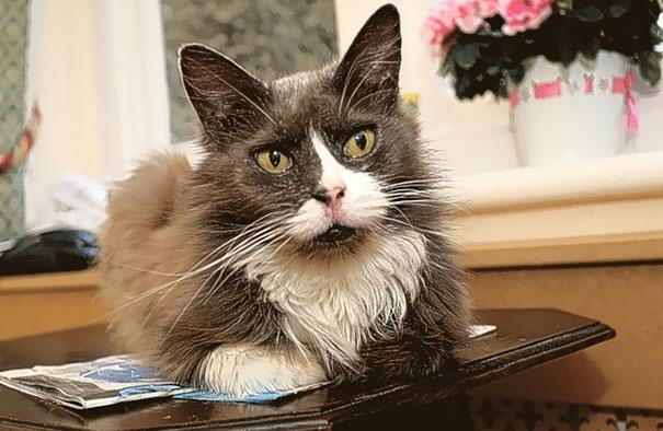 cat-tracks-owner-nursing-home-cleo-nancy-cowen-1