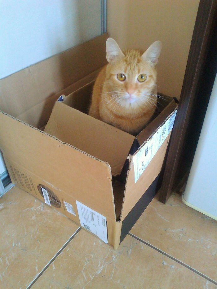 Cat In A Box Inside Another Box = Cat Squared Happy
