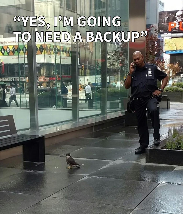 Cop & Falcon: What Did NYPD Officer Say On The Phone?