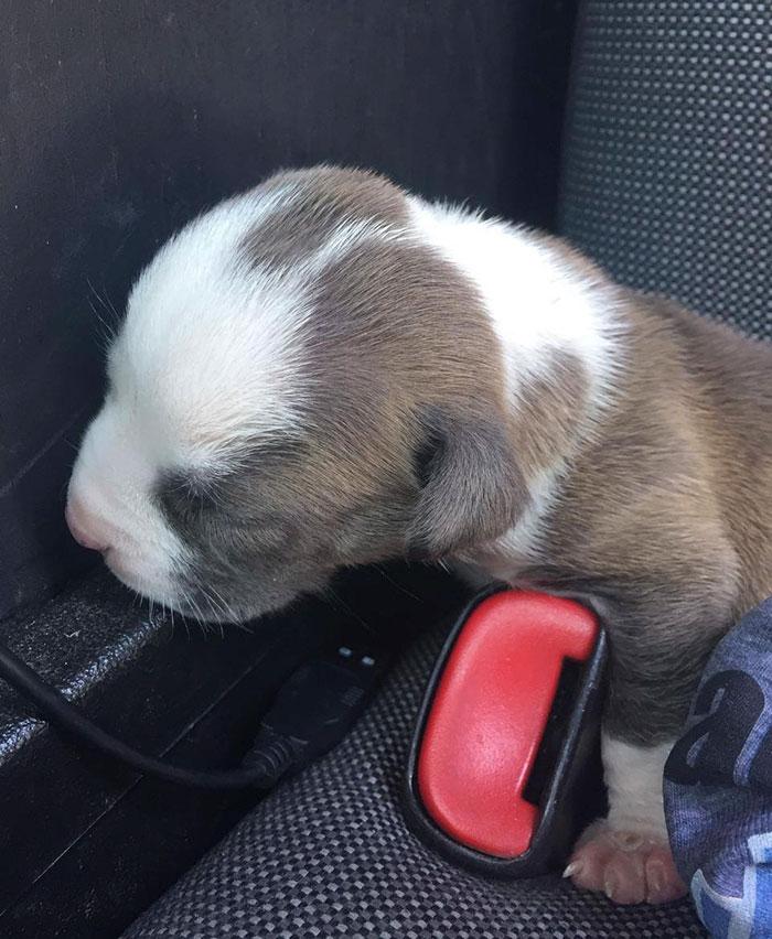 cops-save-puppy-dog-hot-car-break-window-pensacola-1