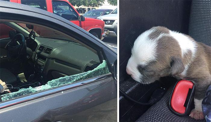 Cops Break Window To Rescue Newborn Puppy Stuck In Hot Car