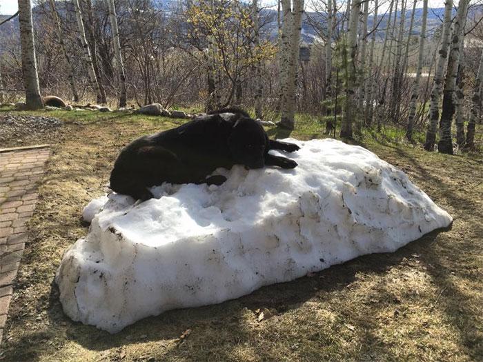 dog-lies-on-snow-pile-1