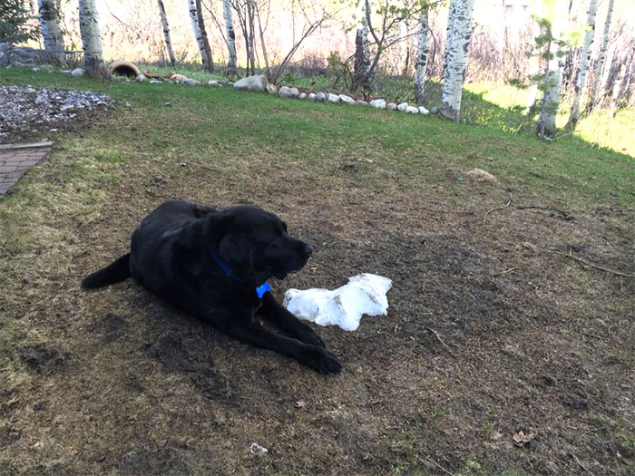 dog-lies-on-snow-pile-10
