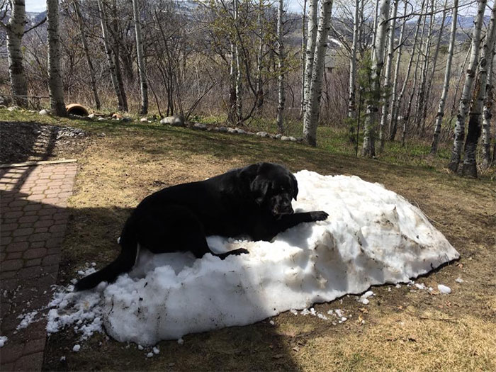 dog-lies-on-snow-pile-3
