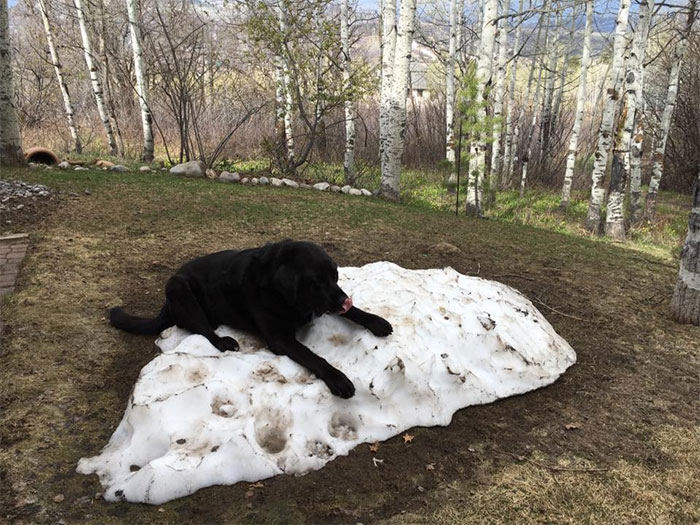 dog-lies-on-snow-pile-4
