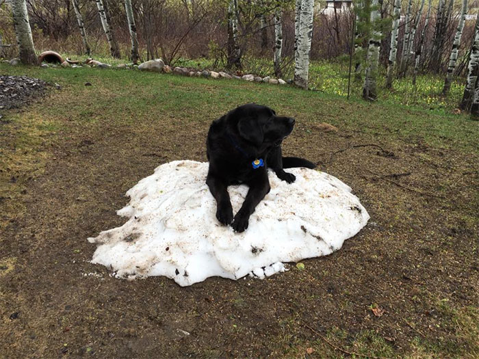 dog-lies-on-snow-pile-7