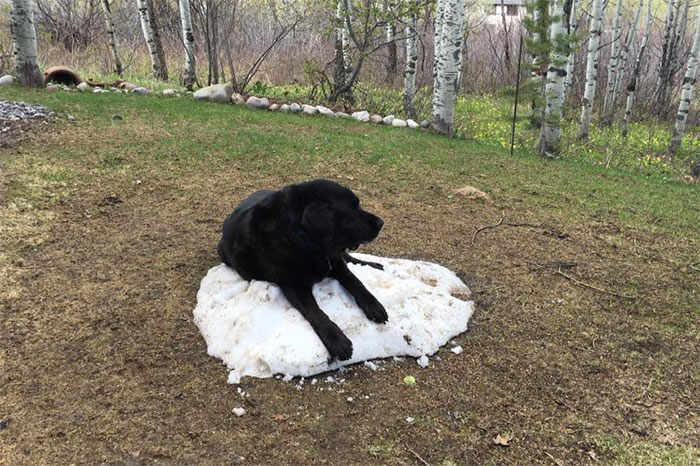 dog-lies-on-snow-pile-8