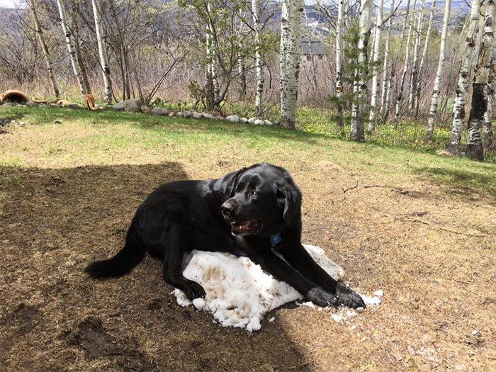 dog-lies-on-snow-pile-9