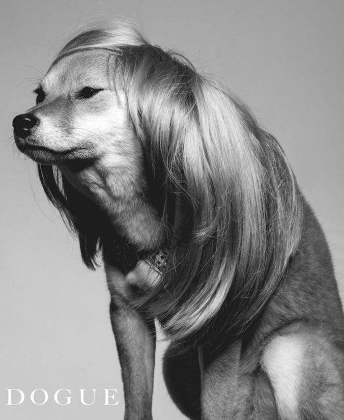 I Like To Photoshop My Dog