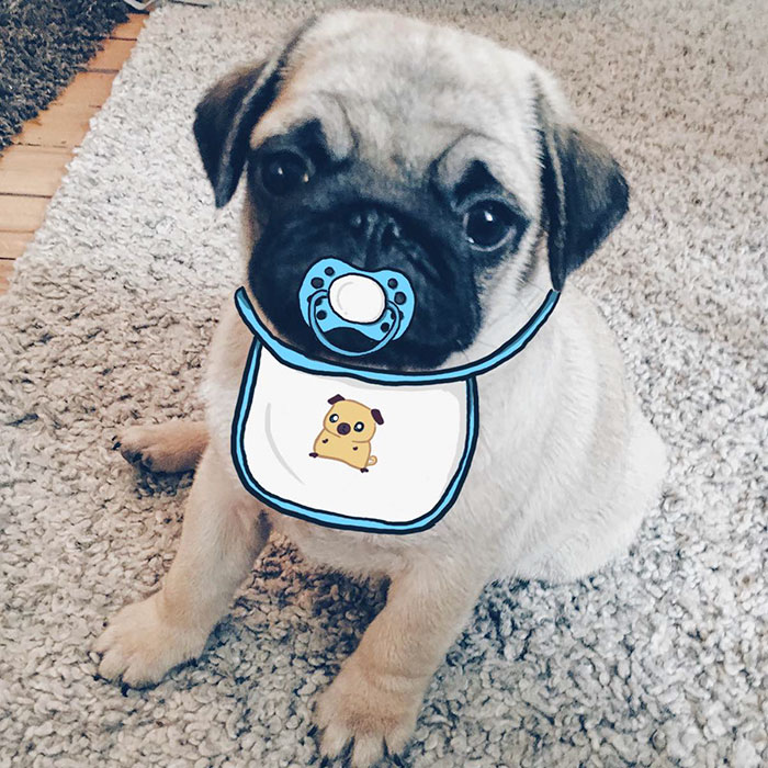 My Girlfriend And I Love To Doodle On Our Pug's Face (24 Pics)