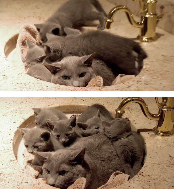 Angry Dad Cat Liked To Sit In The Sink By Himself...Until The Kittens Found Him