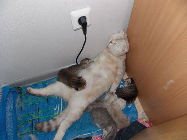 Poor Mom Felt Asleep Just Like That