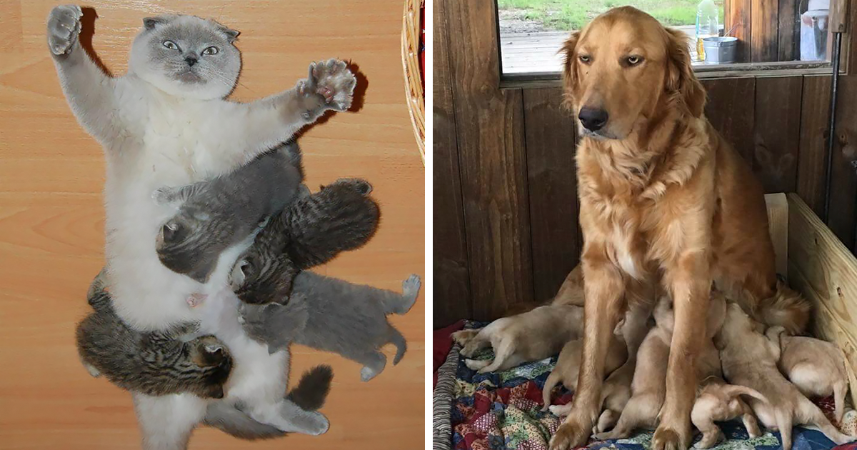 10+ Animal Expressions That Perfectly Sum Up What It's Like To Be A Mother