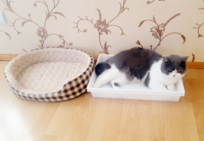 Pilkutė Prefers To Fit In This Plastic Box Rather Than Her Perfect Cat Bed