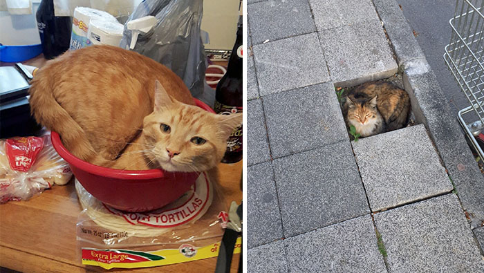 Post A Photo Of Your Cat In 'If I Fits I Sits' Situations