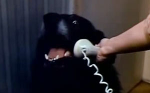 Hilarious Emergencies Dogs Would Have If They Could Dial 911