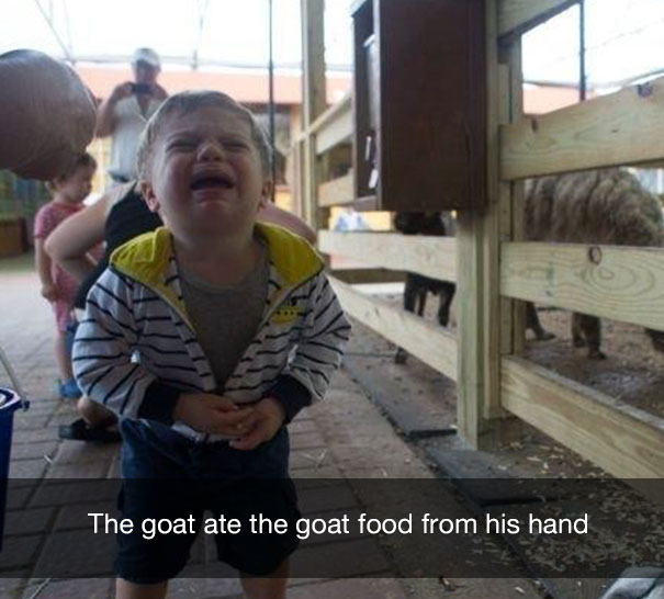 The goat ate the goat food from his hand