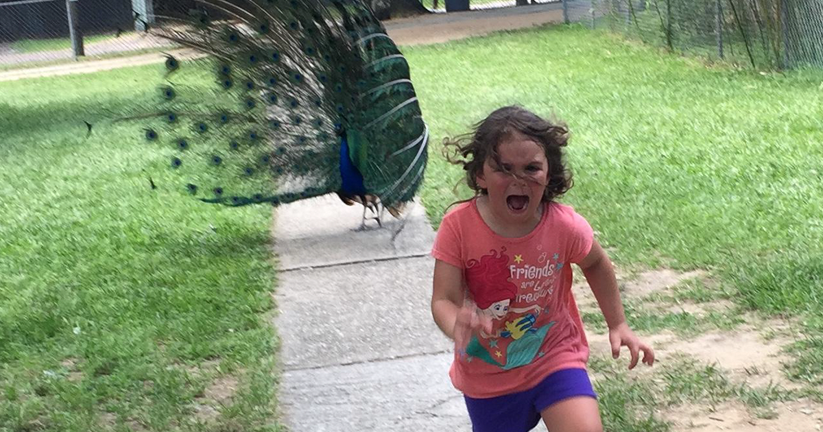 Family Trip To Petting Zoo Didn't Go As Planned, Internet Response Is Hilarious