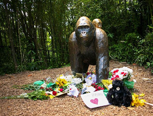 gorilla-shot-boy-zookeper-explains-harambe-amanda-odonoughue-cincinnati-zoo-2