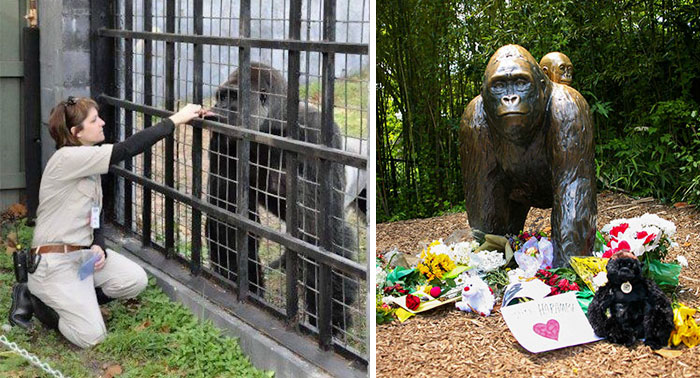 Zookeeper Finally Explains What Harambe Was Actually Doing With The Kid