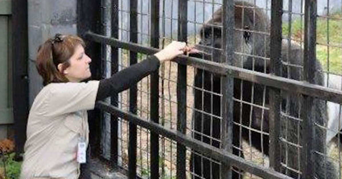 zookeeper finally explains what harambe was actually doing with the