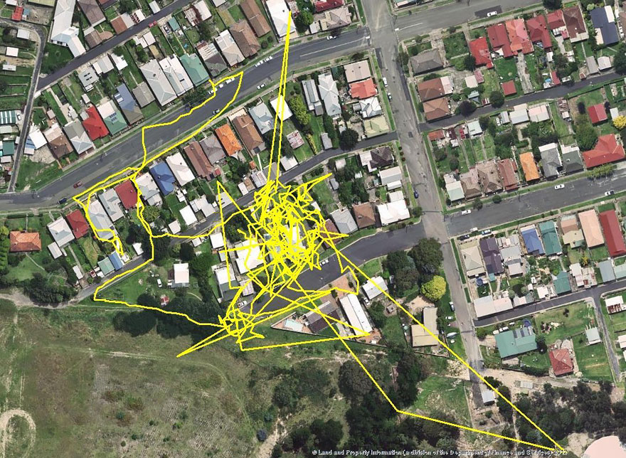 gps-tracker-cat-movement-map-lithgow-central-tablelands-local-land-services-6