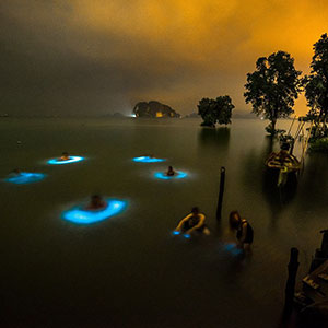 Halo Effect: Bioluminescent Phytoplankton Surround Swimmers in Circles Of Blue Light