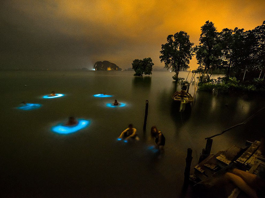 halo-effect-swimmers-bioluminescent-phytoplankton-thailand-will-strathmann