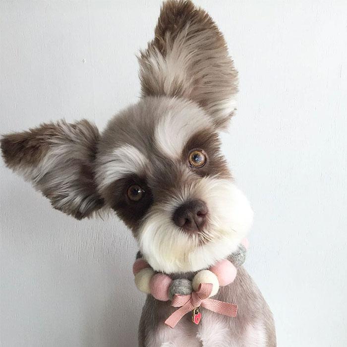 Meet Mir, The Supermodel Dog