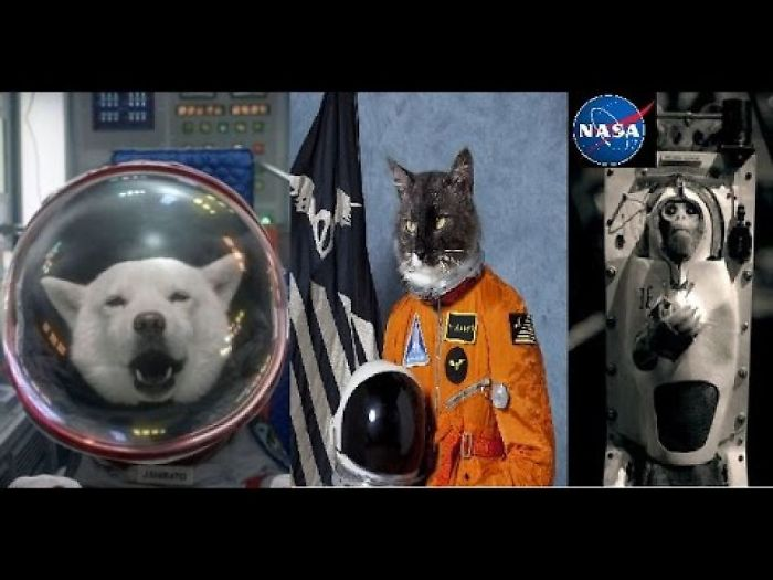 Nasa Animals In Space, Which Animals That Went To Space