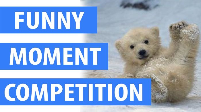 Funny Animal Competition In May 28, 2016