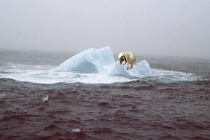 This Dog Is Traped On An Iceberg
