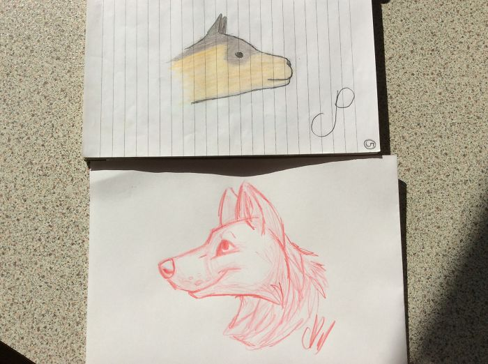 Canine Head (sketch) 12 Year Old - 15 Year Old