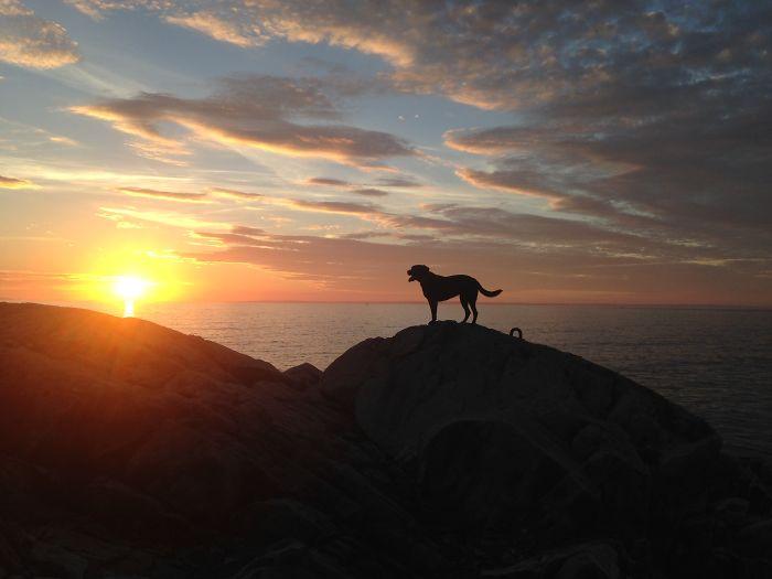 Rosie On Isle Au Haut, Maine, Usa – Sunset, November 5, 2015