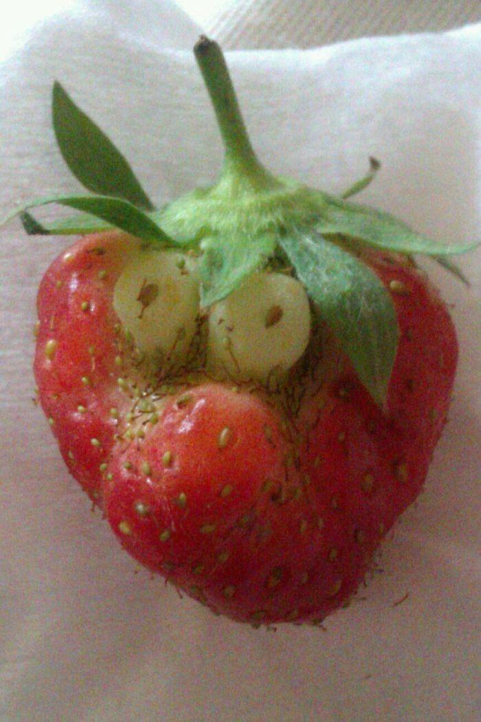 Funny Fruits No Photoshop