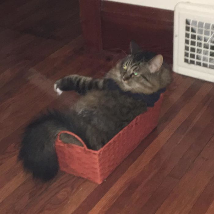 Kirk Attempts To Fit In A Basket