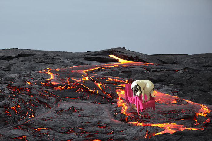 This Dog Is Scared Of Lava River