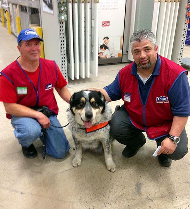 man-hired-service-dog-brain-injury-lowe-canada-9